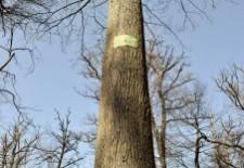 Le chêne de la Résistance