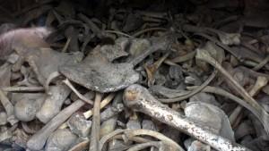 ossements, ossuaire de douaumont, verdun, balade historique, www.balades-historriques.com, Christophe Courau